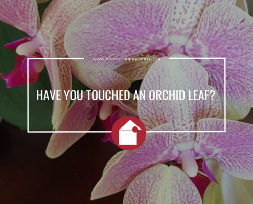 HAVE YOU TOUCHED AN ORCHID LEAF