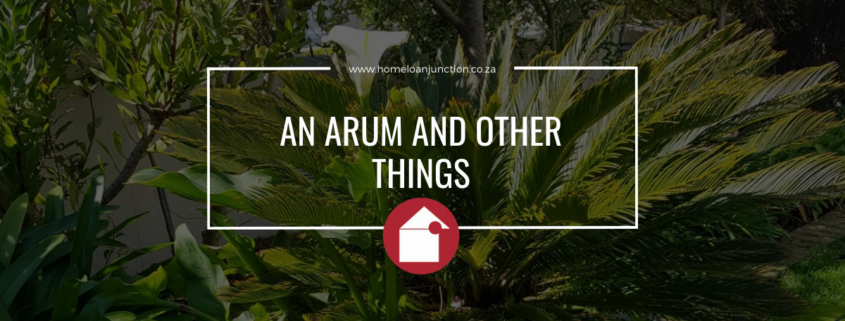 AN ARUM AND OTHER THINGS